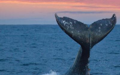 Whale watching in Bazaruto Archipelago Mozambique!